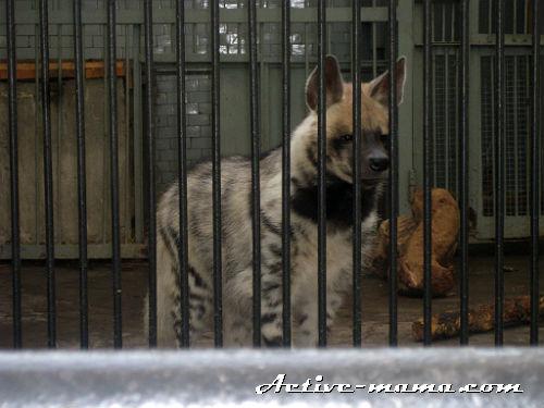 животные Николаевского зоопарка