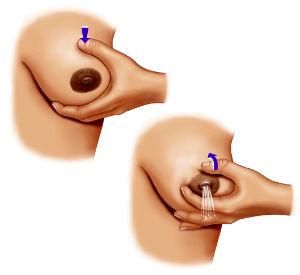 как сцедить грудное молоко руками