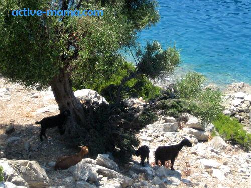 Эгейские острова, остров козлов