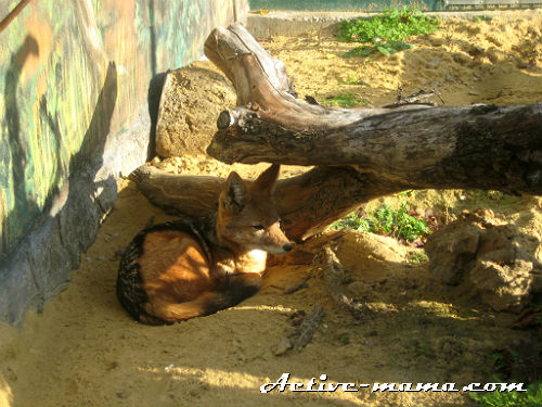 Лисица. Зоопарк в Николаеве
